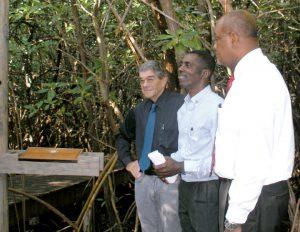 mangrove-boardwalk-1696